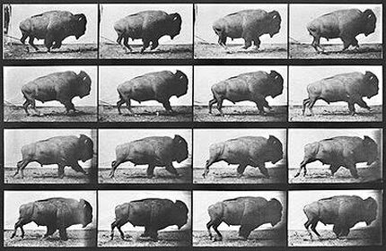 edward muybridge_buffalo