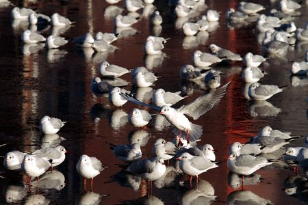 20101226_mouettes_rouge