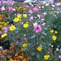 2008 10 02 Mon mélange de fleurs d'été