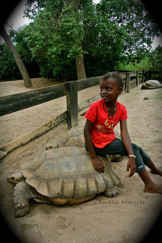 absa-village des tortues couleur