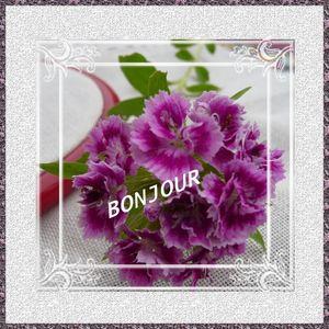 Bonjour_fleur