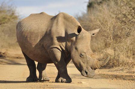 Swaziland (57)