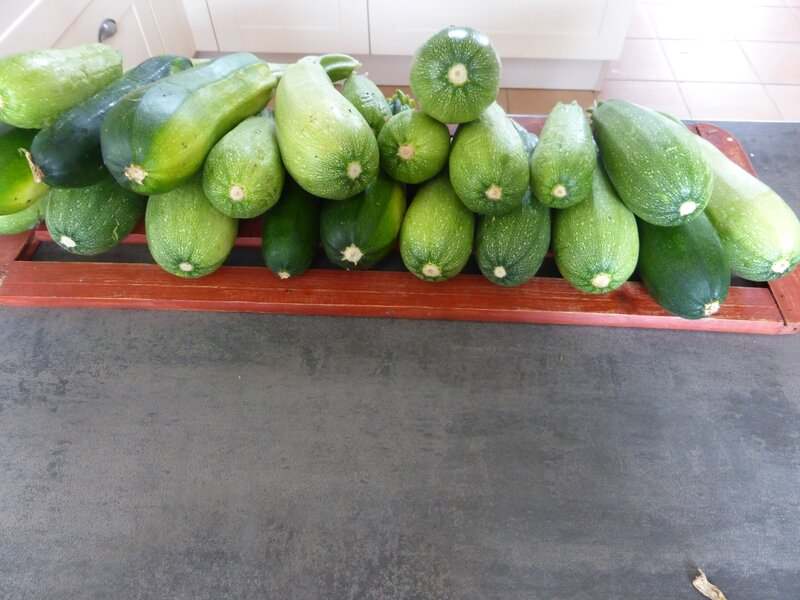 8-courgettes (3)