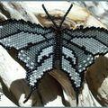 Papillon argenté