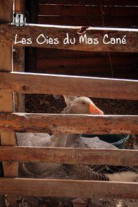 mas_can_