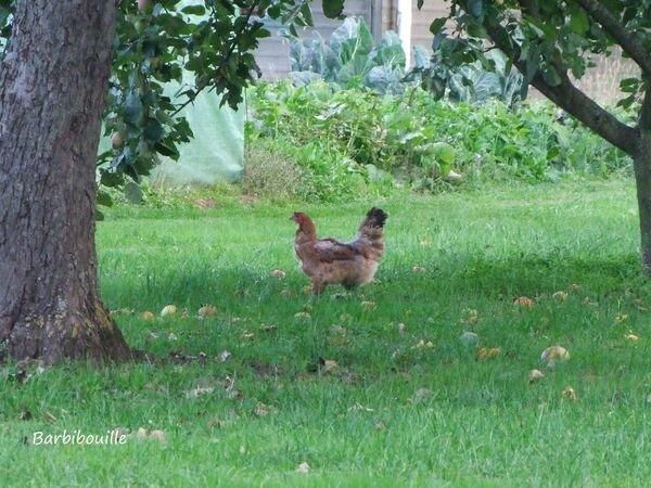 poule26 Sept15