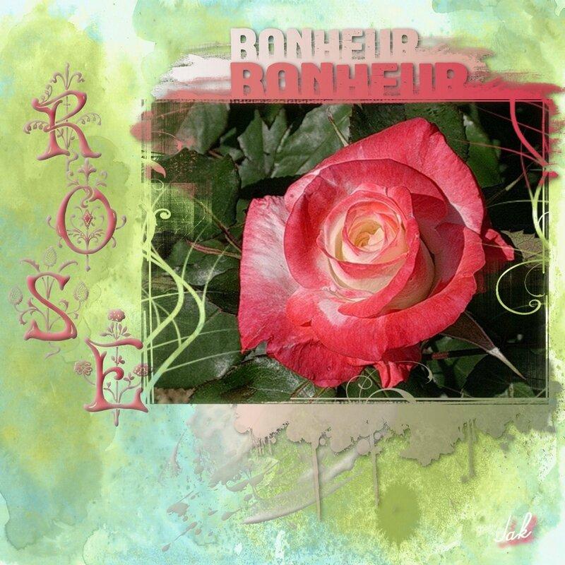 album blog 5