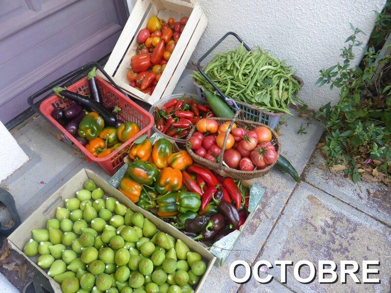 4-récolte du jour