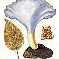 Usages et légendes liés aux polypores