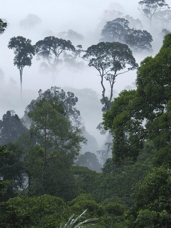 thomas-marent-minden-pictures-dawn-with-fog-at-lowland-rainforest-danum-valley-conservation-area-borneo-malaysia