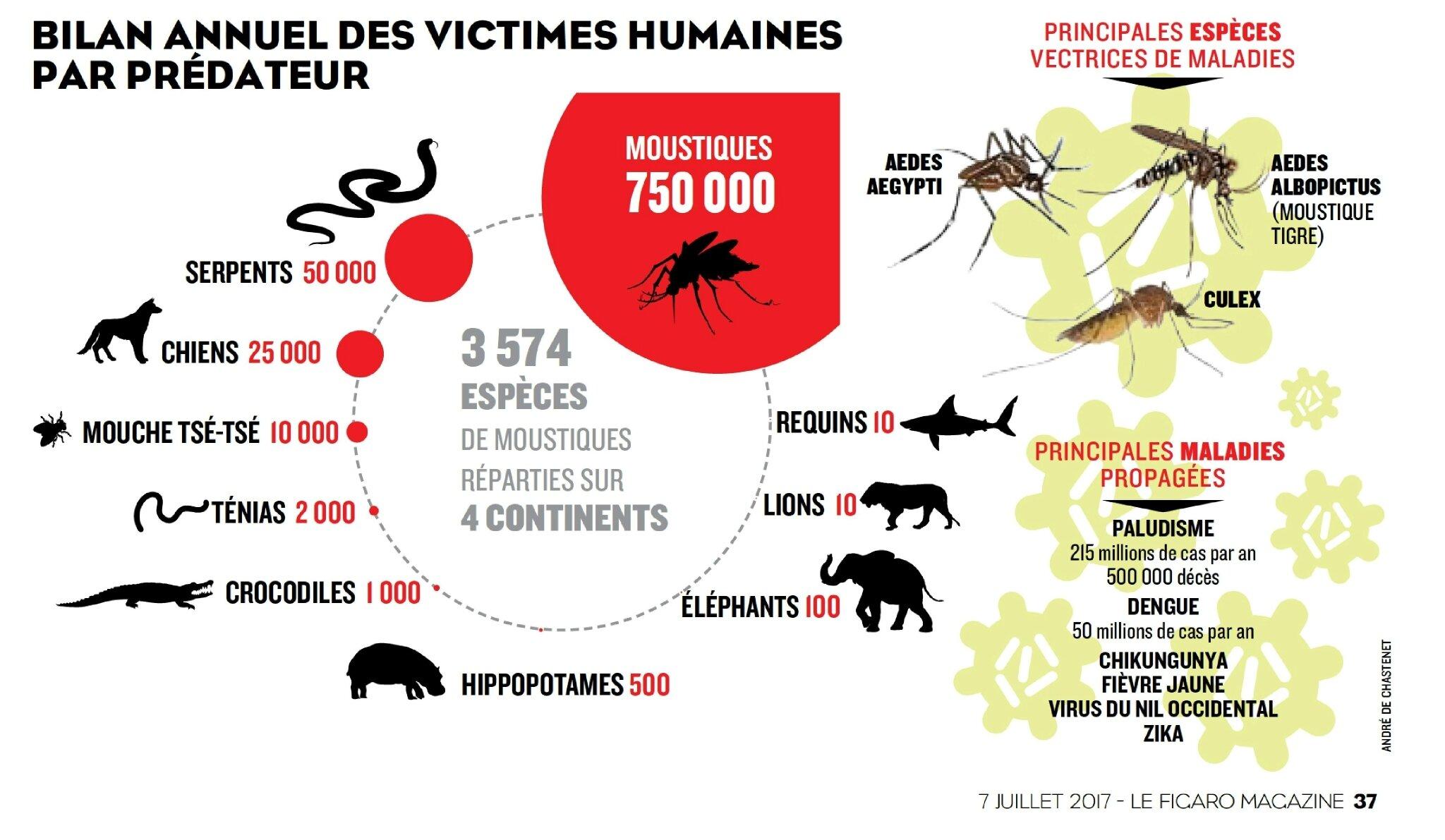 animaux tueur