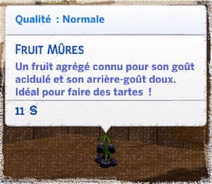 fruit mûres