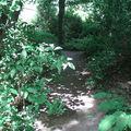 Sous-bois d'érables du Japon, rhododendrons, hydrangeas,…