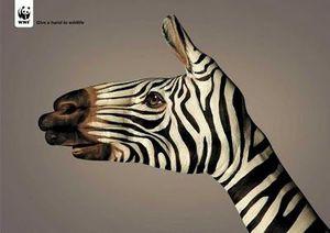 wwf_zebra_thumb