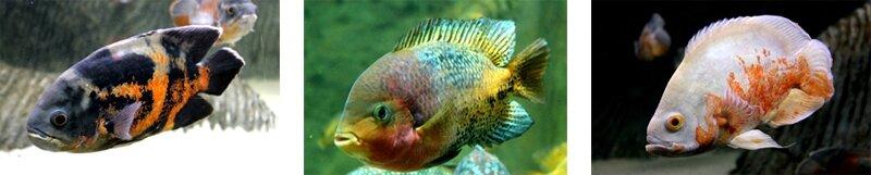 poissons naiades les3vagues