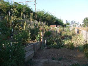 Jardins suresnes 15-09-12 011