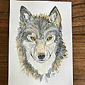 Aquarelle : le loup
