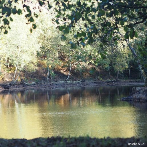 broceliande_4
