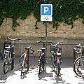 vélos, ombres, végétation_4632