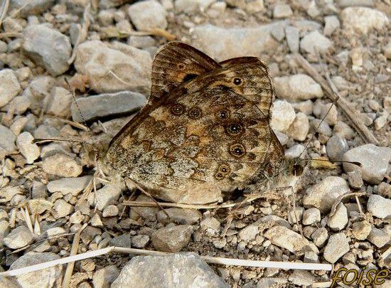 papillon___deux_t_tes
