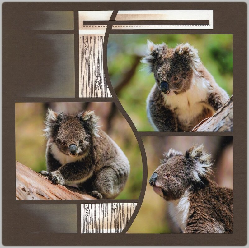 Koalas d'Ottoway 2