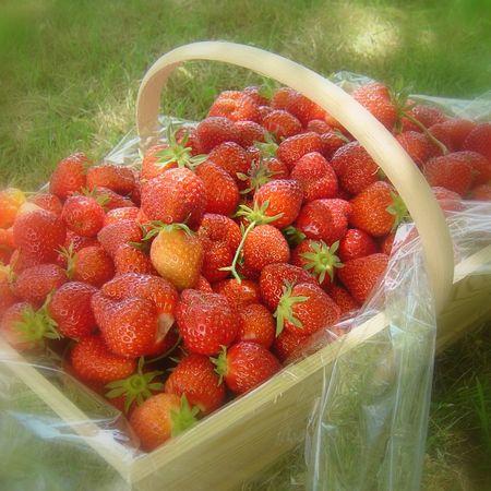 panier_de_fraises_2