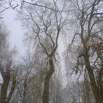 Virton_et_saint_mard_sous_la_neige__82_