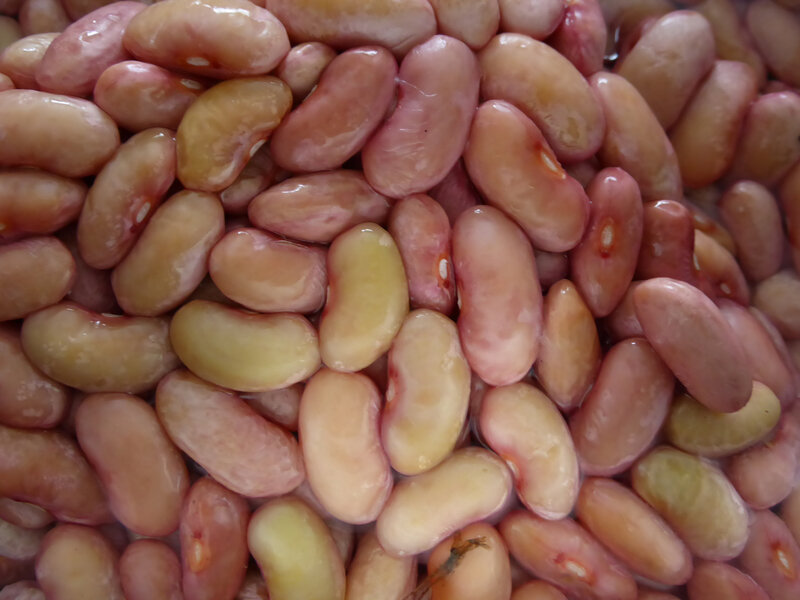 1-haricots demi-secs (3)