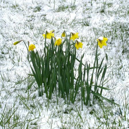 neige_pascale