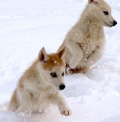 dodge et dakota première neige
