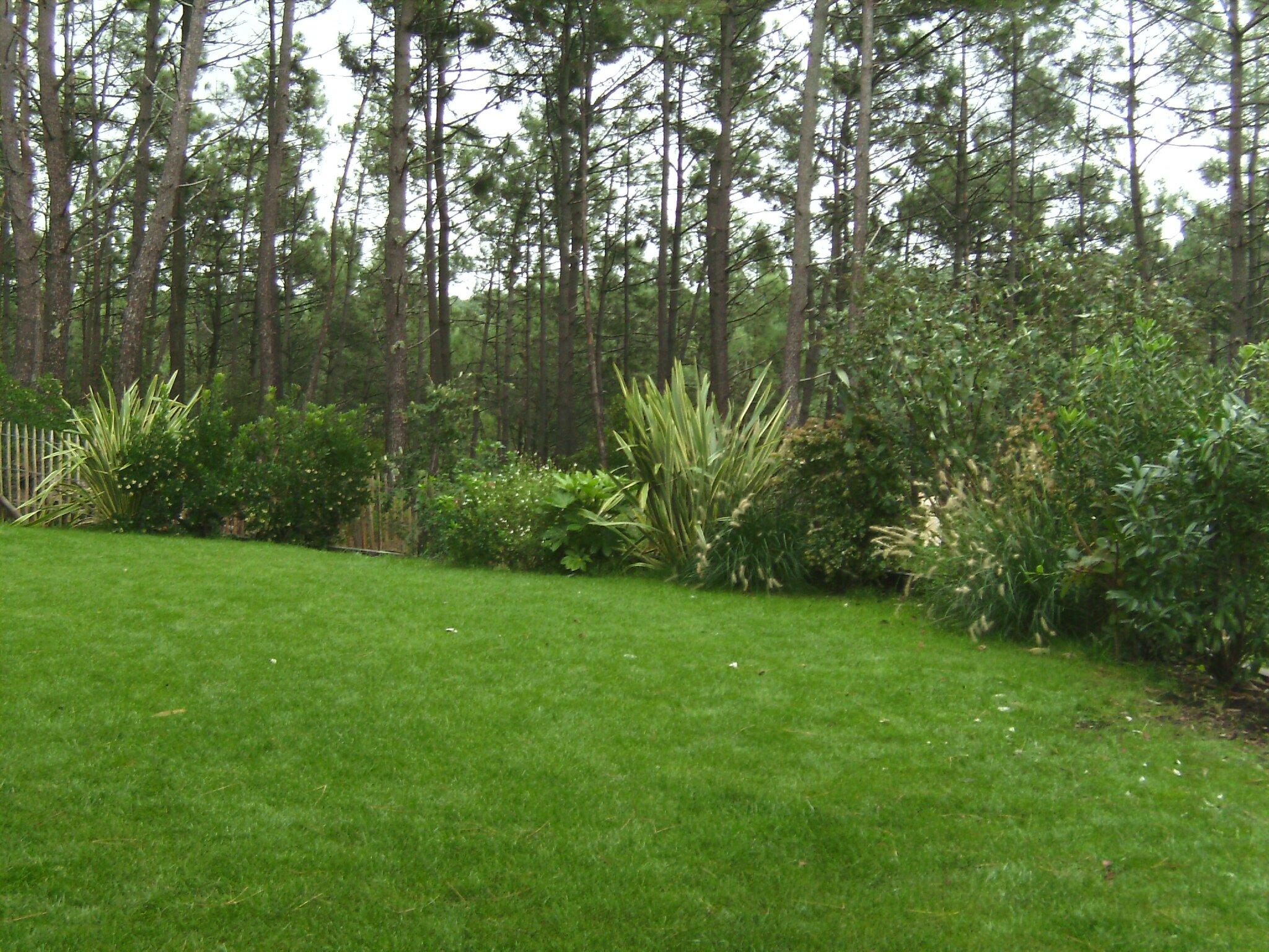 bild5269 photo de plantation de haie vari e antoine et ses jardins. Black Bedroom Furniture Sets. Home Design Ideas