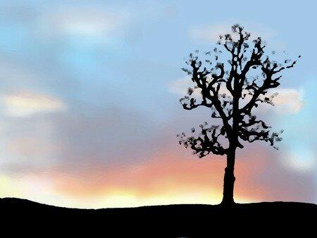 arbre_couteau_palette_Web