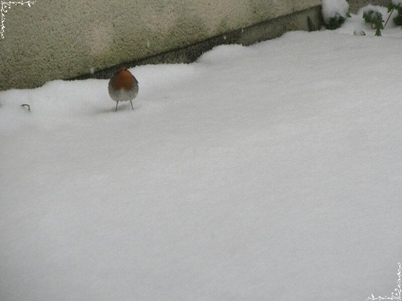 neige (101)