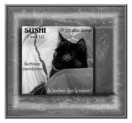 SUSHICopier