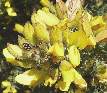 fleurs de 15 mm environ