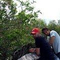 Promenade dans les Everglades ( parcours fléché )