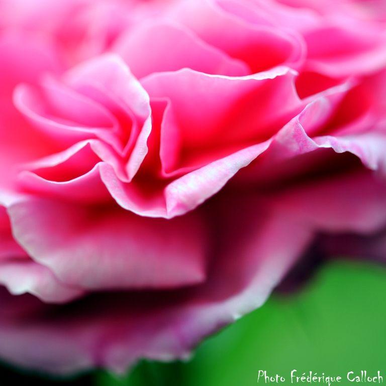 rose_parfum