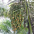 jardin botanique de mascarin