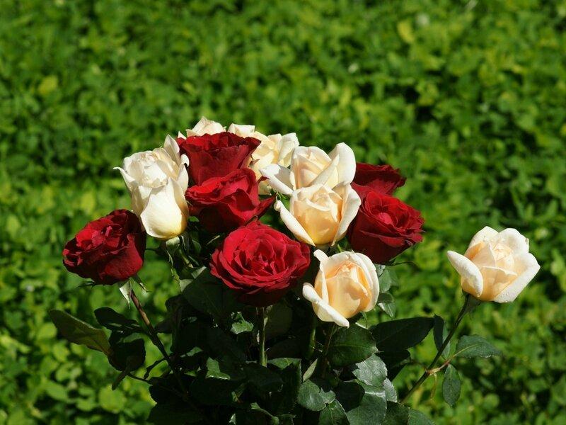 wallpapers_rose_bouquet-dsc00850