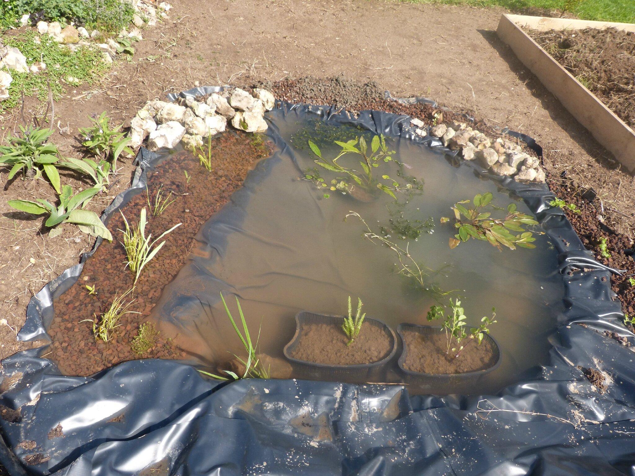 Le petit bassin photos de la faune et de la flore de ma - Petit bassin pour jardin ...