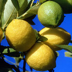 _corce_de_citron