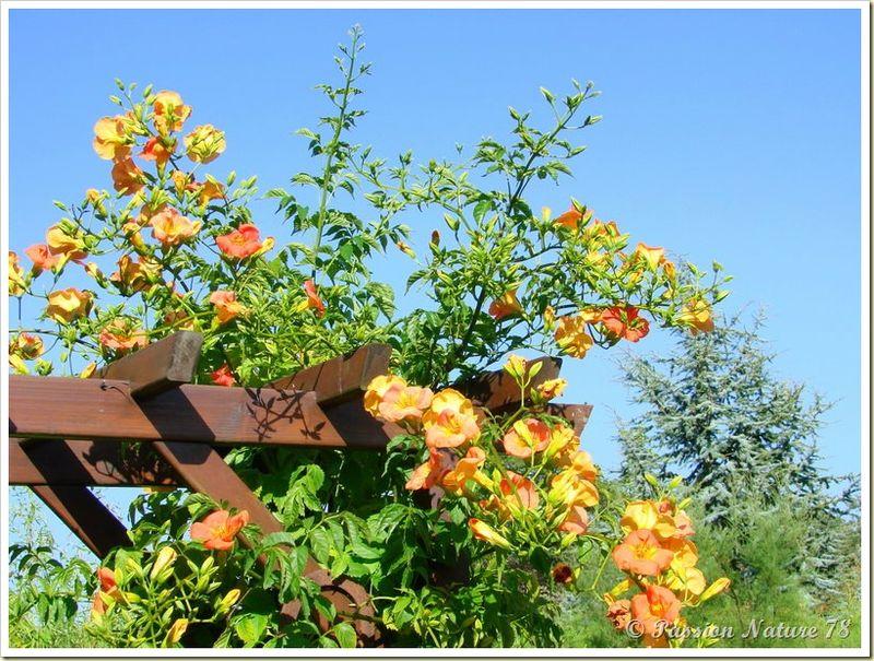 Déco de jardin (46)