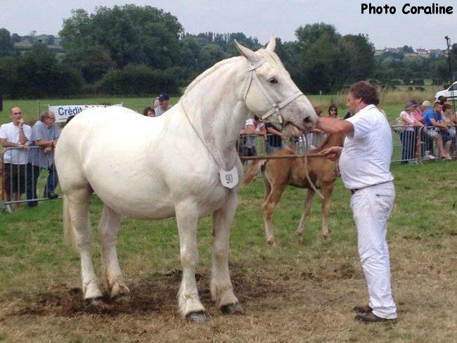 ROSE du Marais - Concours National - Samer (62) - 27 juillet 2014 - 4e (Coupe Challenge des Juments)