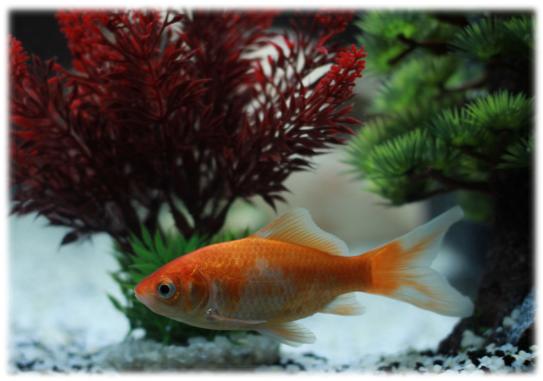 La pharmacie pour poisson d eau douce mystere naturel for Bac hopital poisson