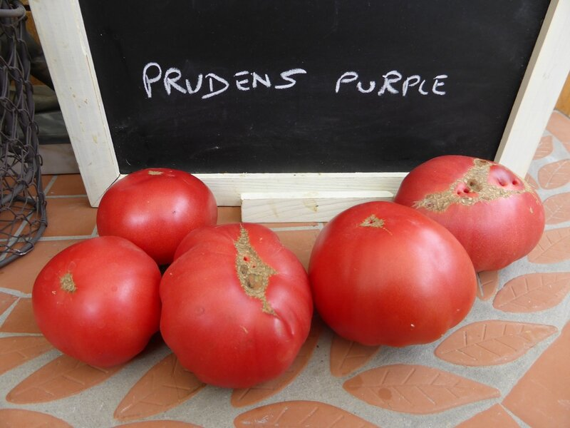 17-tomates prudens purple- (1)