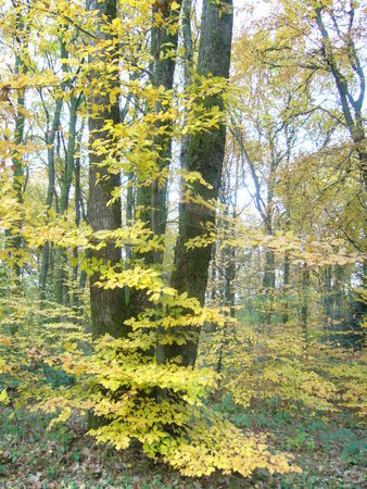 Mellier_3_arbres