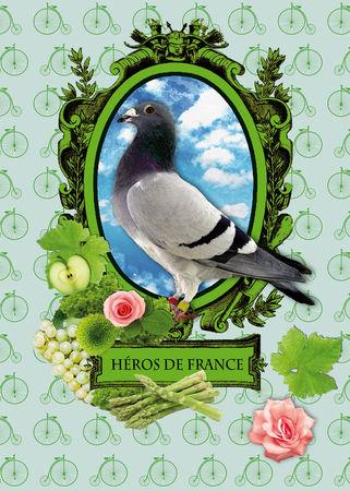 essais_pigeon_180