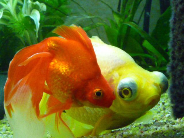Vers un monde nautique surprenant deux voiles de chine for Nitrite aquarium poisson rouge