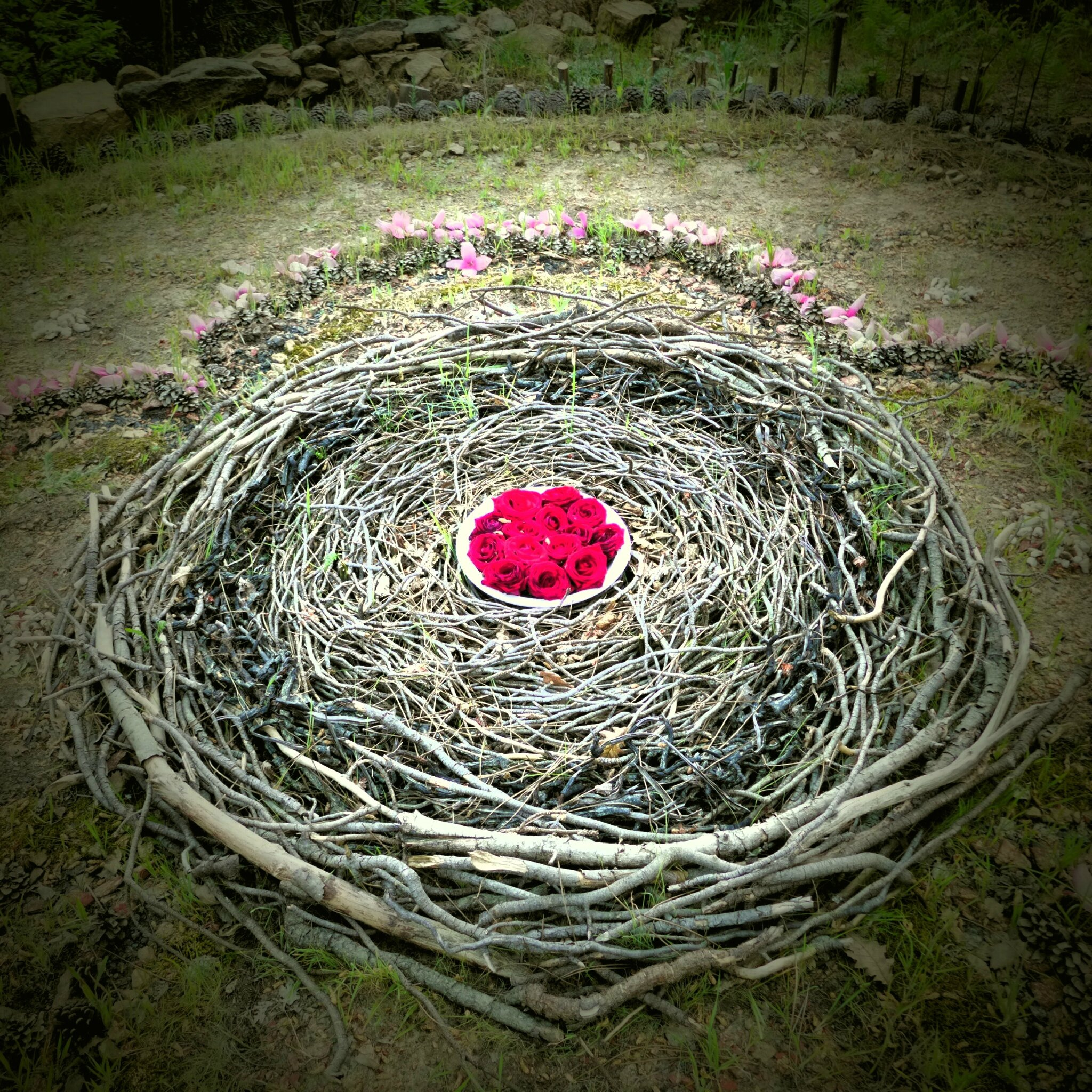 roses sur nid yurtao