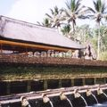 bali_temple tirta empul_233